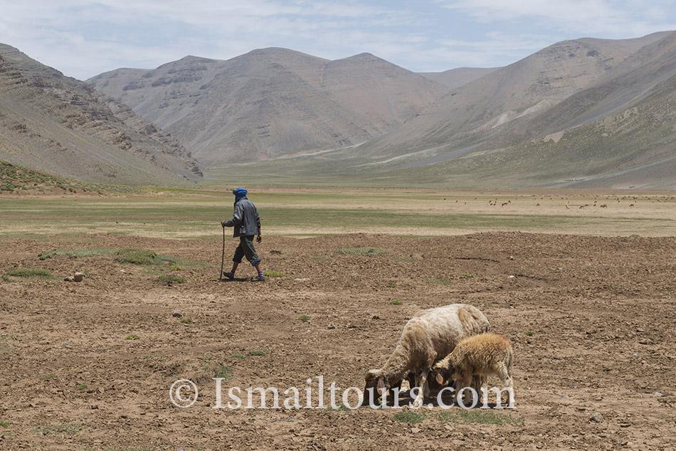 Marokko, Izoughar, 20140530. Landschap, kaal in de hoge atlas. Schapen grazen in de kale vlakte. Landscape in the High Atlas, Naamsvermelding verplicht; Foto: Sabine Joosten/Hollandse Hoogte