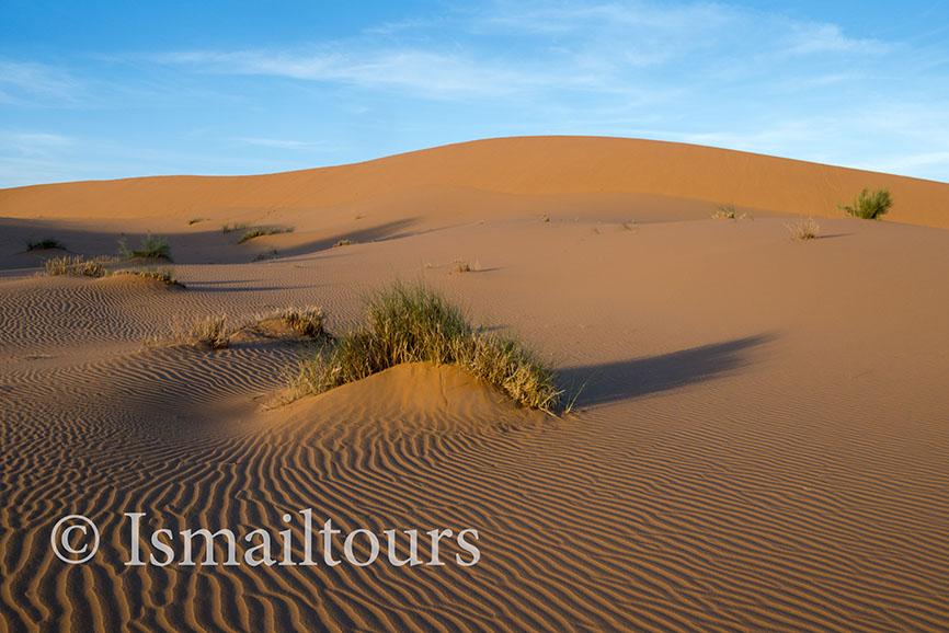 Marokko, Merzouga, 20150316. WWoestijn in de lente. Fotoreis. zandvlakte, wandelvakantie in de Sahara woestijn. Foto ; Sabine Joosten