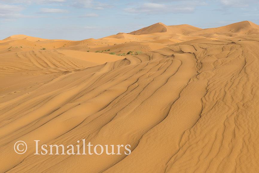 Marokko, Mhammid, 20150315. Woestijn in de lente. Fotoreis. zandvlakte, wandelvakantie in de Sahara woestijn. Foto ; Sabine Joosten