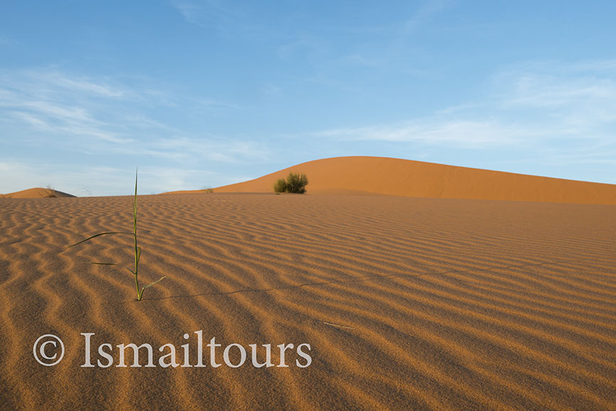 Marokko, Merzouga, 20150316. Woestijn in de lente. Fotoreis. zandvlakte, wandelvakantie in de Sahara woestijn. Foto ; Sabine Joosten