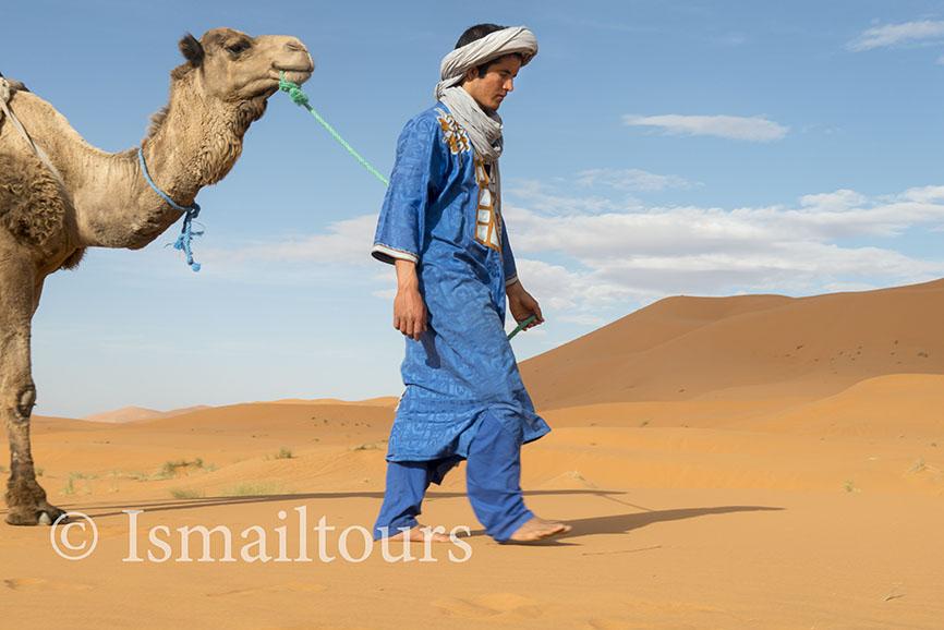 Marokko, Merzouga, 20150315. Woestijn in de lente. Fotoreis. Dromedarissen in de woestijn. Foto ; Sabine Joosten