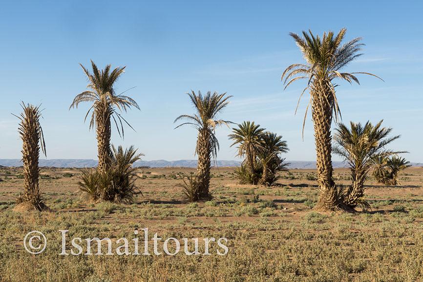 marokko,, Mhamid, 20150313. Woestijn landschap, fotoreis Sahara woestijn met palmen.Foto ; Sabine Joosten