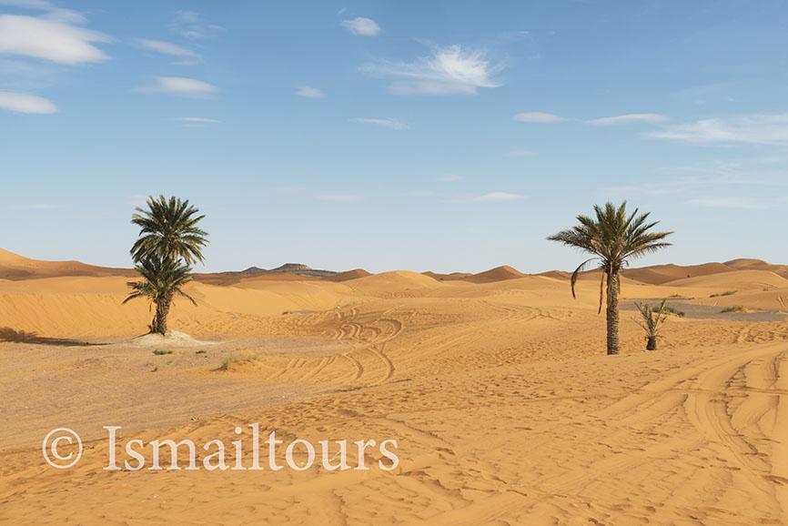 Marokko, Mhammid, 20150315. Woestijn landschap, fotoreis Sahara woestijn met palmen.Foto ; Sabine Joosten