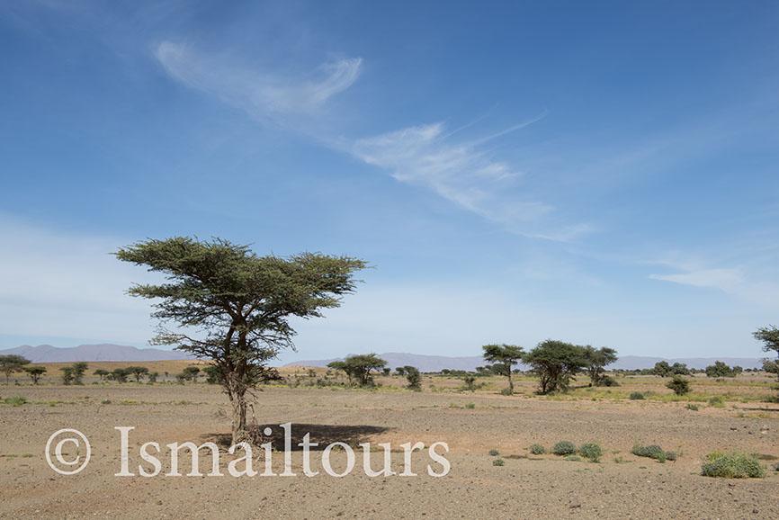 Marokko, Foum Zguid, 20150311. LWoestijn landschap, Palmbomen in het zand. Fotoreis ismailtours Desert landscape. Foto ; Sabine Joosten