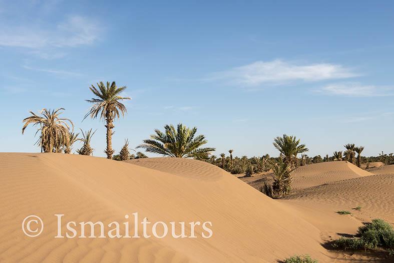 marokko,, Mhamid, 20150313. Woestijn landschap, Palmbomen in het zand. Fotoreis ismailtours Desert landscape. Foto ; Sabine Joosten
