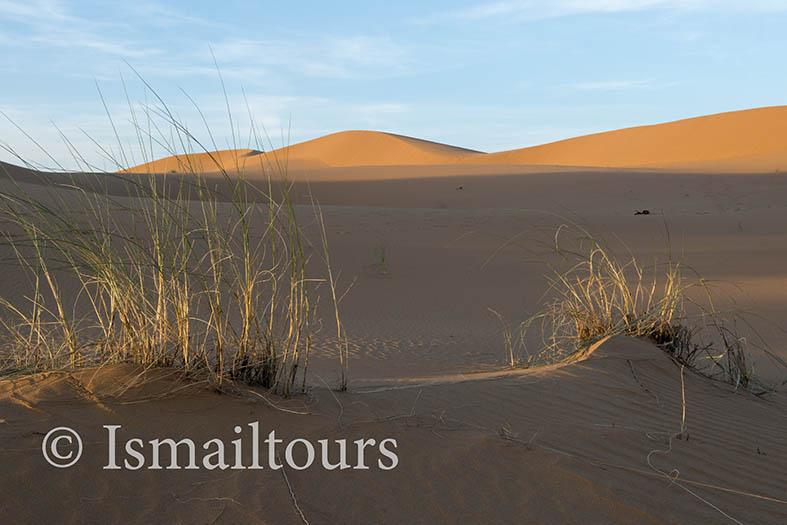Marokko, Merzouga, 20150316. Woestijn landschap in de lente.Graspollen in het zand. Grass into the sand.Desert in springtime , landscape. . Naamsvermelding verplicht; Foto ; Sabine Joosten/Hollandse Hoogte