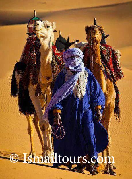marokko. dromedarissen tijdens fotoreis
