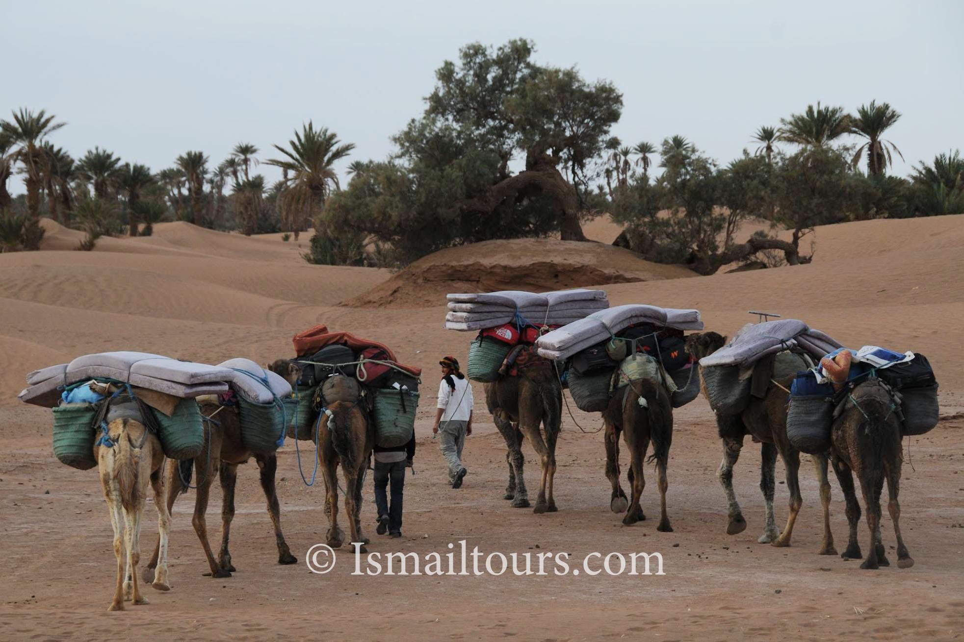 woestijn 2.jpg