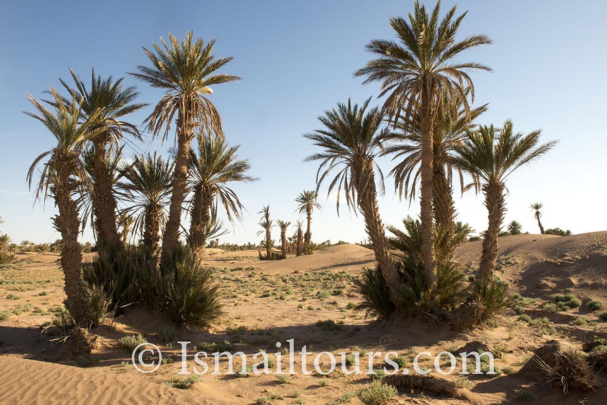 marokko,, Mhamid, 20150313.  Woestijn landschap, Palmbomen in het zand aan de rand van de woestijn. Palmtrees in the  desert , landscape. Naamsvermelding verplicht; Foto ; Sabine Joosten/Hollandse Hoogte