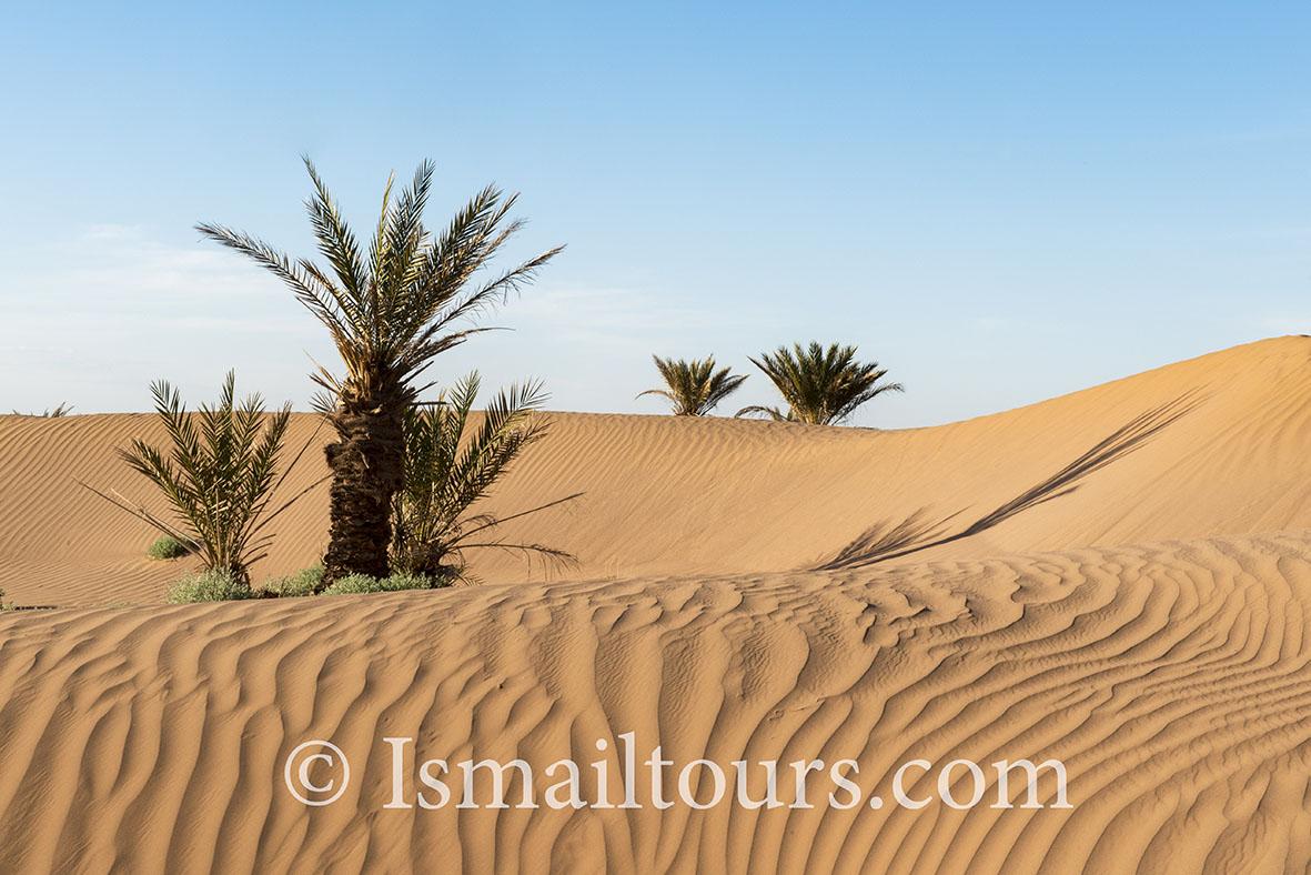 marokko,, Mhamid, 20150313. Woestijn landschap, Palmbomen in het zand. Palmtrees in the desert. Desert landscape. Naamsvermelding verplicht; Foto ; Sabine Joosten/Hollandse Hoogte