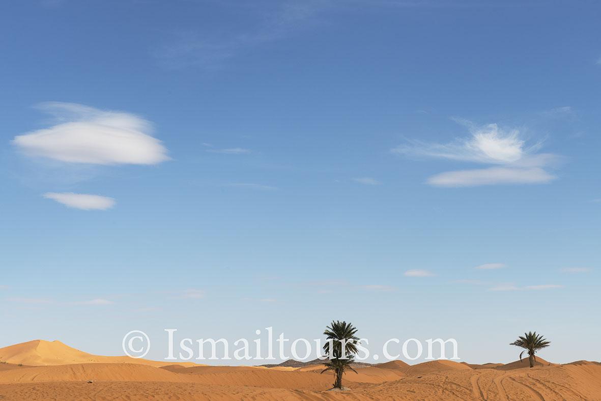 Marokko, Mhammid, 20150315.  Woestijn in de lente. Palmboom in het zand. Palmtree into the sand. Desert in springtime. Naamsvermelding verplicht; Foto ; Sabine Joosten/Hollandse Hoogte
