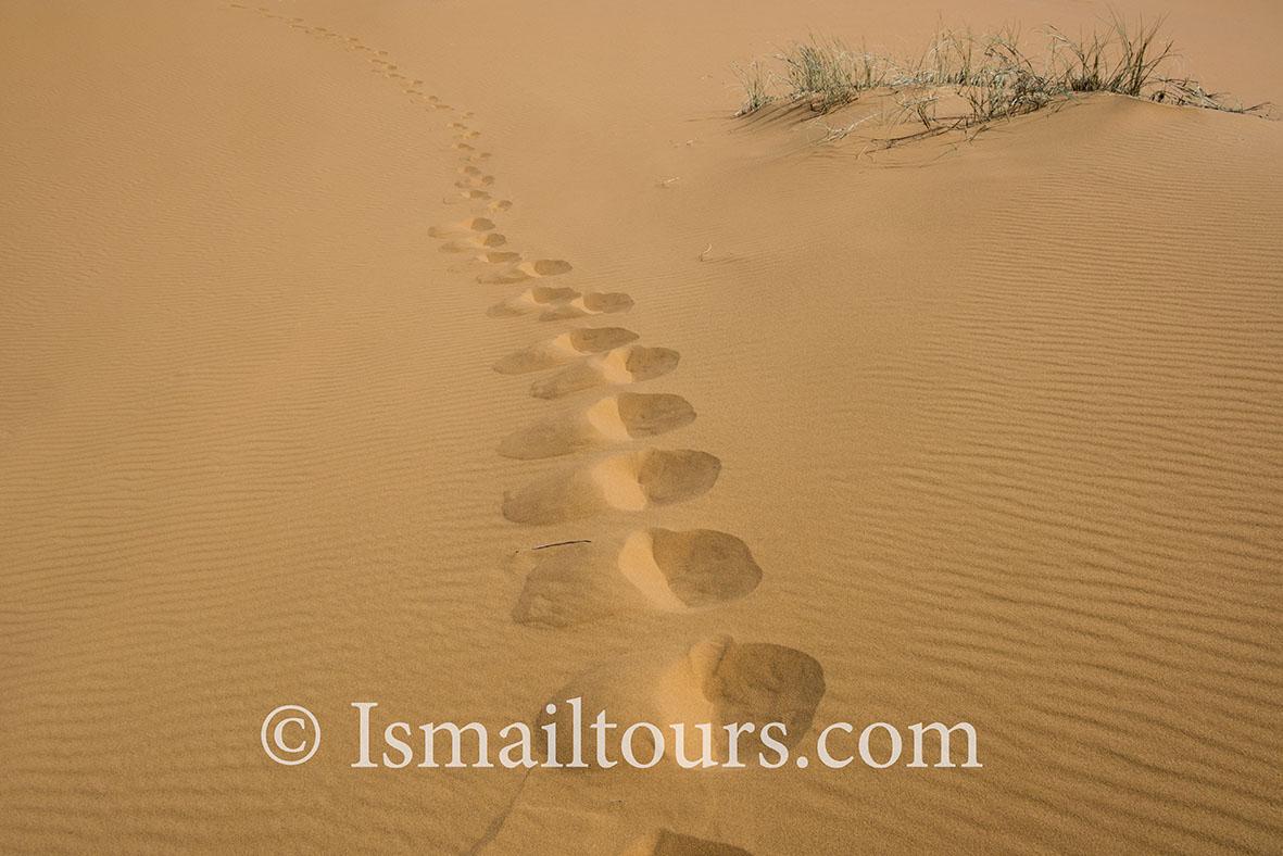 Marokko, Mhammid, 20150316.  Woestijn in de lente. Voetsporen in het zand. Traces in the sand. Desert in springtime. Naamsvermelding verplicht; Foto ; Sabine Joosten/Hollandse Hoogte