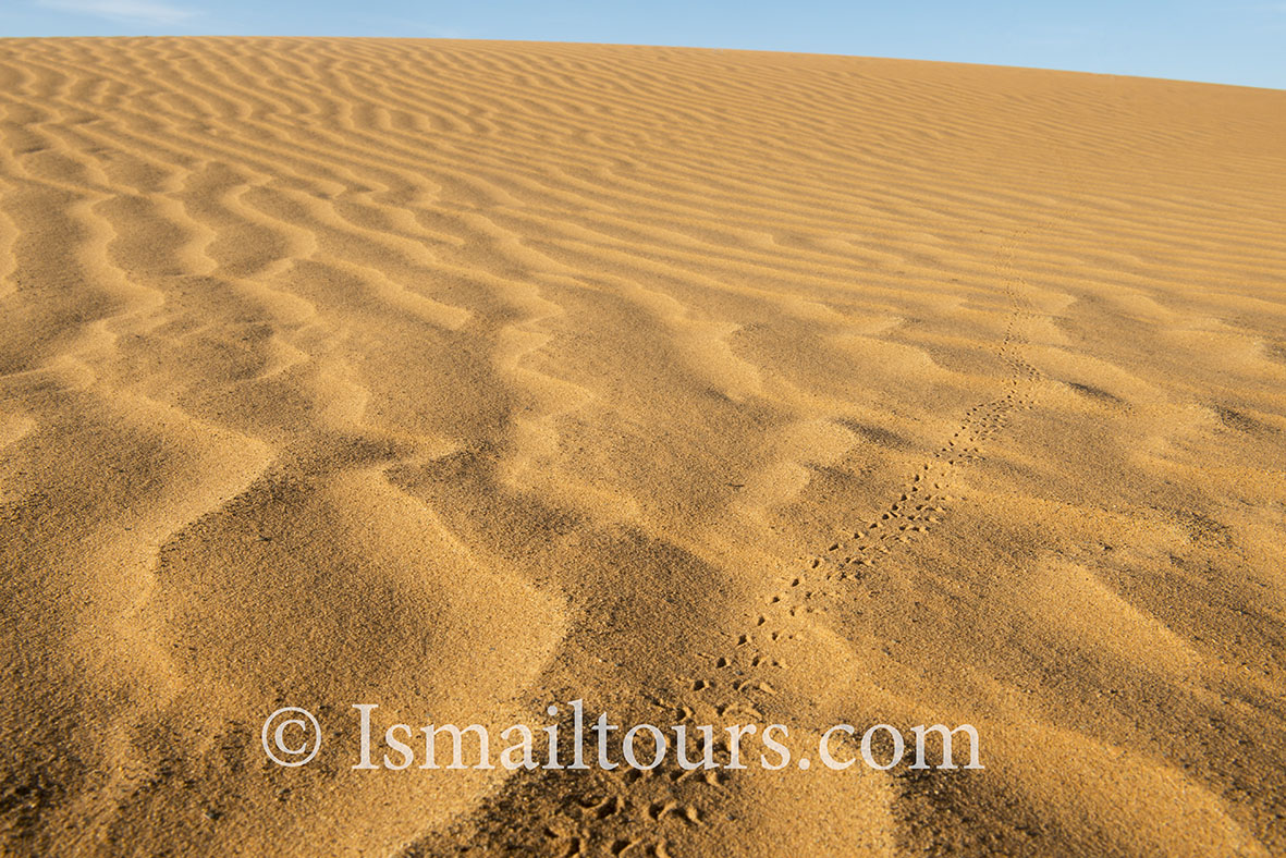 Marokko, Mhammid, 20150316.  Woestijn in de lente. Structuur in het zand. Structures of sand. Desert in springtime. Naamsvermelding verplicht; Foto ; Sabine Joosten/Hollandse Hoogte