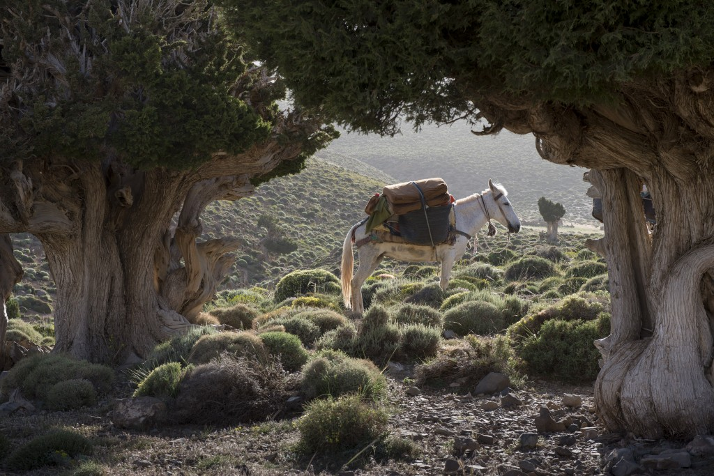 trek,, avontuur, adventure, marokko, ismail tours, tour, tours, trekking,