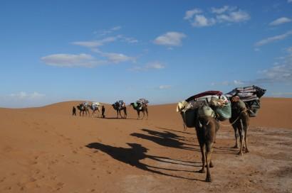 dromedaris trekking, desert, woestijn