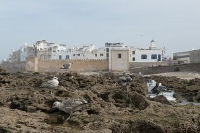 coast, kust, atlantique, sea, mer, kustgebied, marokko, moroc, maroc, trekking, trek, randonnee, zee, seaside, atlantisch, essaouira, kustgebied, traveling, travel, reizen, reis, i